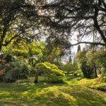 Vegetazione Giardino di Ninfa